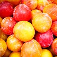 Apricot (FF)