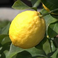 Organic Citron (NF)