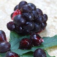 Boysenberry (FLV)