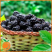 Blackberry (RF)
