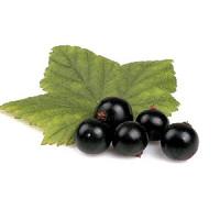 Organic Black Currant (NF)