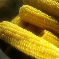 Sweet Corn (HC)