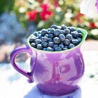 Blueberry (HC)