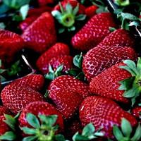 Red Strawberry (EF)