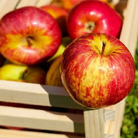 Red Delicious Apple (HC)
