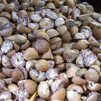 Organic Nutmeg (NF)