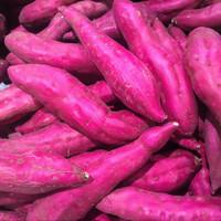 Purple Potato (HC)
