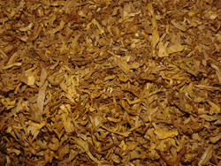 Burley Tobacco (FA)