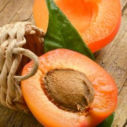 Apricot (TDA)