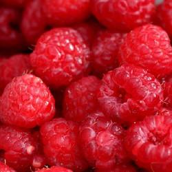 Raspberry (FLV)