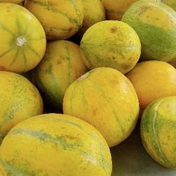 Melon (BD)