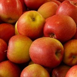 Apple (TP)