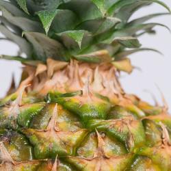Pineapple (JF)