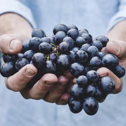 Grape (HA)
