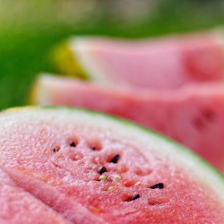 Watermelon (CNV)