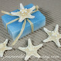 Natural Knobby Starfish - Melt & Pour Soap Packaging