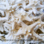 Natural Knobby Starfish