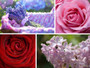 Deluxe Bath & Body Pink Gift Set - Lost Garden - Mood Board