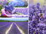 Lavender Gift Set Mood Board