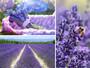 Deluxe Bath & Body Gift Set (Lavender) Mood Board