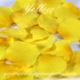 Yellow Silk Rose Petals