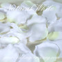 White Silk Rose Petals (Two Tone)