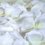 White Silk Rose Petals (Two Tone)