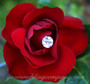 Acrylic Crystal Flower Pins in a Red Rose