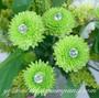 Acrylic Crystal Flower Pins