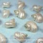 Polished Miniature Turbo Shells
