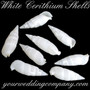 White Cerithium Shells - Wedding Table Decoration