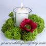 Premium Reindeer Moss - Floral Supplies