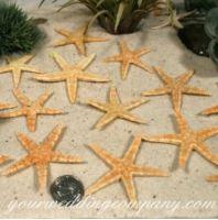 Starfish Confetti