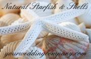 Natural Shells & Starfish