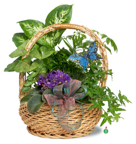 Butterfly  Plant Basket
