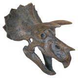 Small Wall Mountable Triceratops Skull