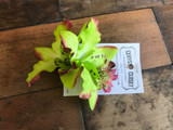 Double Lily Hair Flowers - Green