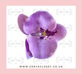 SINGLE FLOWER HAIR ORCHID WITH CROCODILE CLIP - Purple
