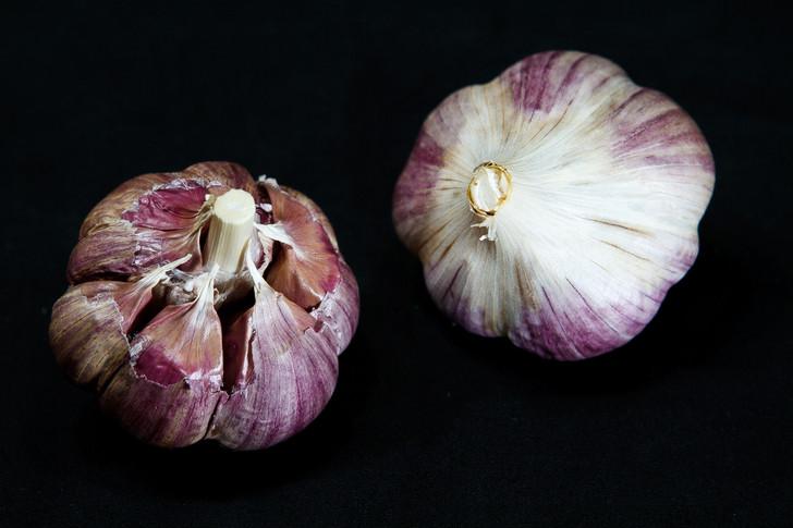 BOGATYR Organic Garlic Seed