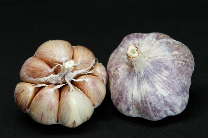 CHINESE PURPLE Organic Garlic Seed