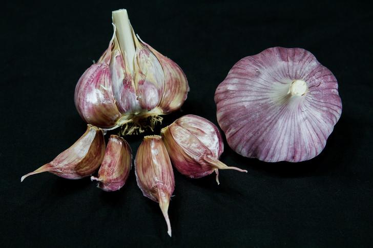 CHESNOK RED  Bulk Organic Garlic Seed