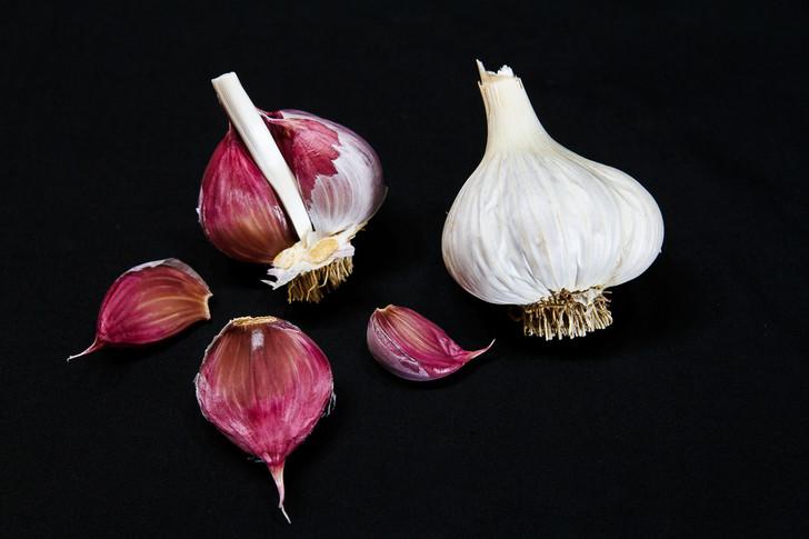 CUBAN PURPLE Organic Garlic Seed