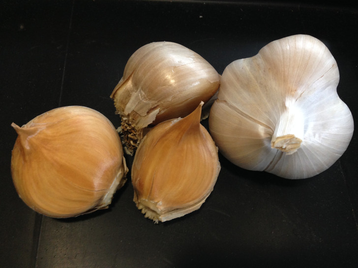 Elephant Garlic Conventional ORGANIC GARLIC SEED