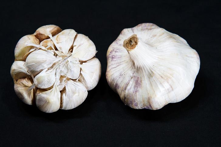 EARLY RED ITALIAN  Bulk Garlic | Filaree Organic Seed Farm