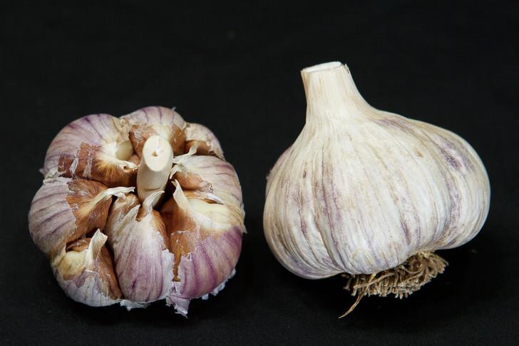 GERMAN MOUNTAIN Garlic | Filaree Organic Seed Farm