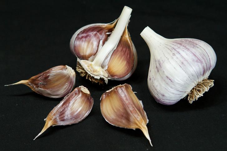KOREAN MOUNTAIN Garlic   Filaree Organic Seed Farm