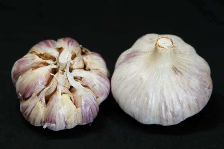 KILLARNEY RED  Bulk Garlic | Filaree Organic Seed Farm