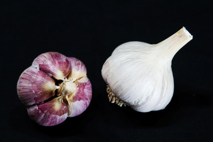LENINGRAD Garlic   Filaree Organic Seed Farm