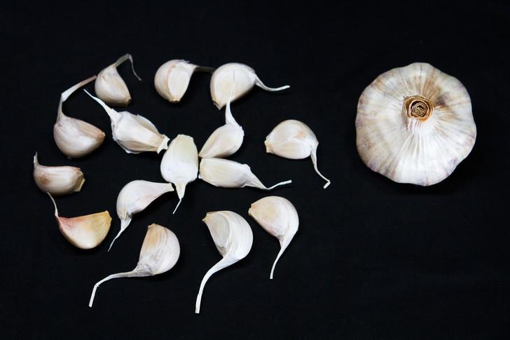 LORZ ITALIAN  Bulk Garlic | Filaree Organic Seed Farm