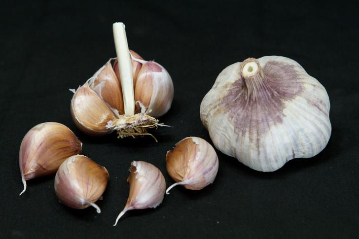 LOTUS Garlic | Filaree Organic Seed Farm